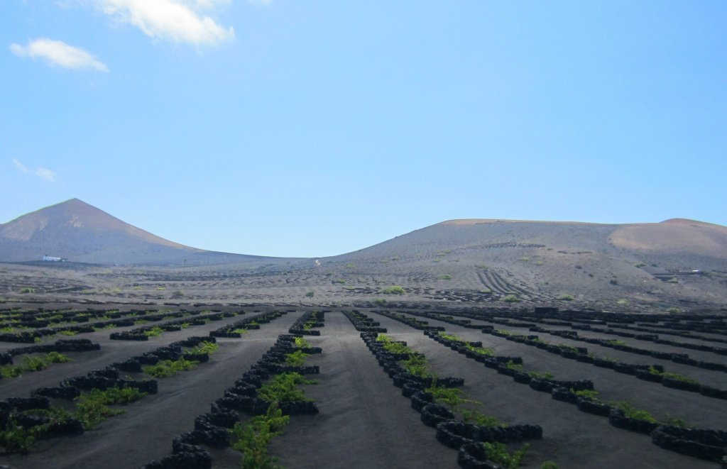 Lunar Vineyards / Lanzarote