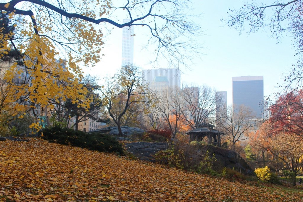 Fall leaves in Central Park, Manhattan, NYC