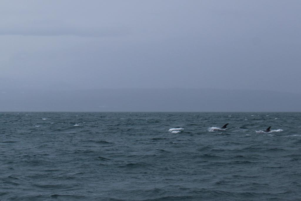 #WhaleWatching in #Iceland is definitely once in a lifetime experience: sailing in the middle of an #ocean, surrounded by wild #nature driven by waves - it feels surreal even when it rains!
