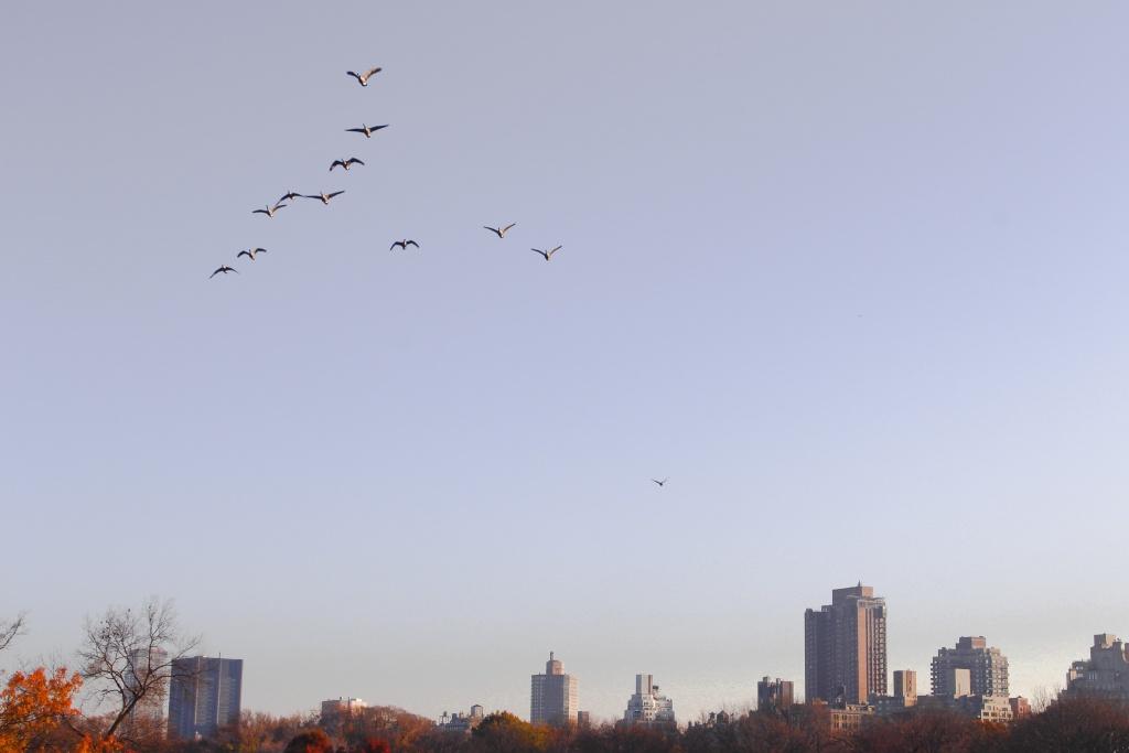 Autumn sky, NYC