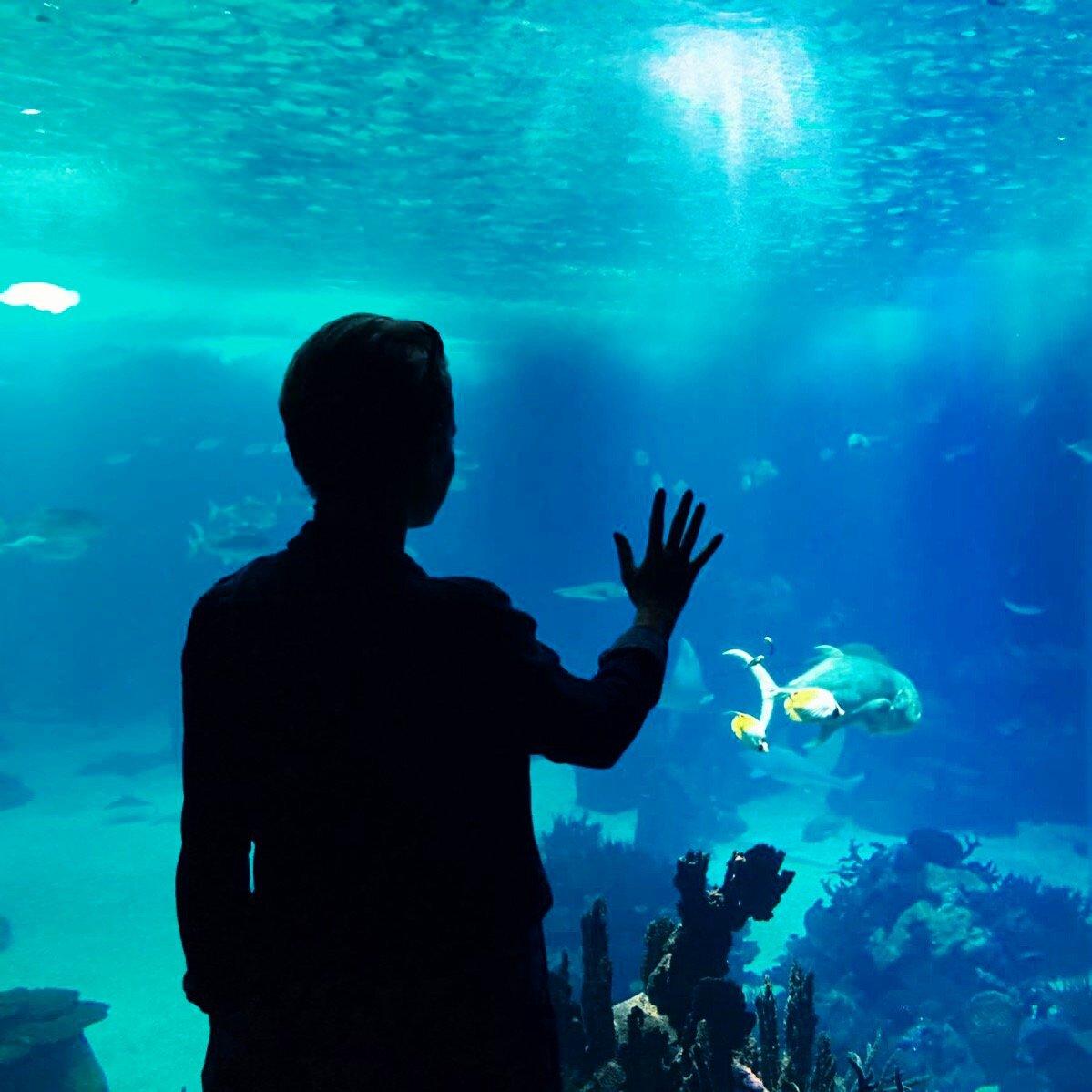 into the blue at Lisbon Oceanarium