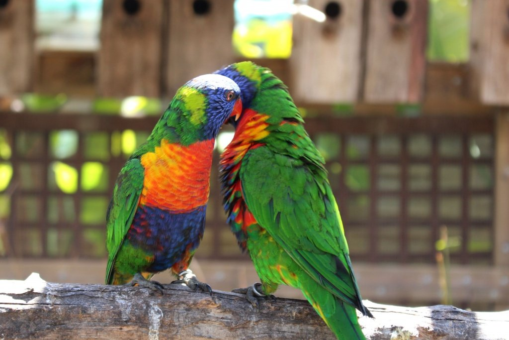 Colorful Birds at Jardin del Papagayo in Benicarlo, Spain