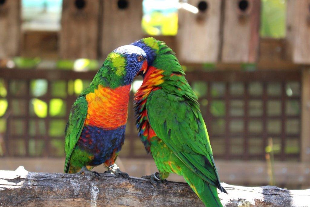 Colorful Birds at Jardin del Papagayo in Benicarlo, Spain