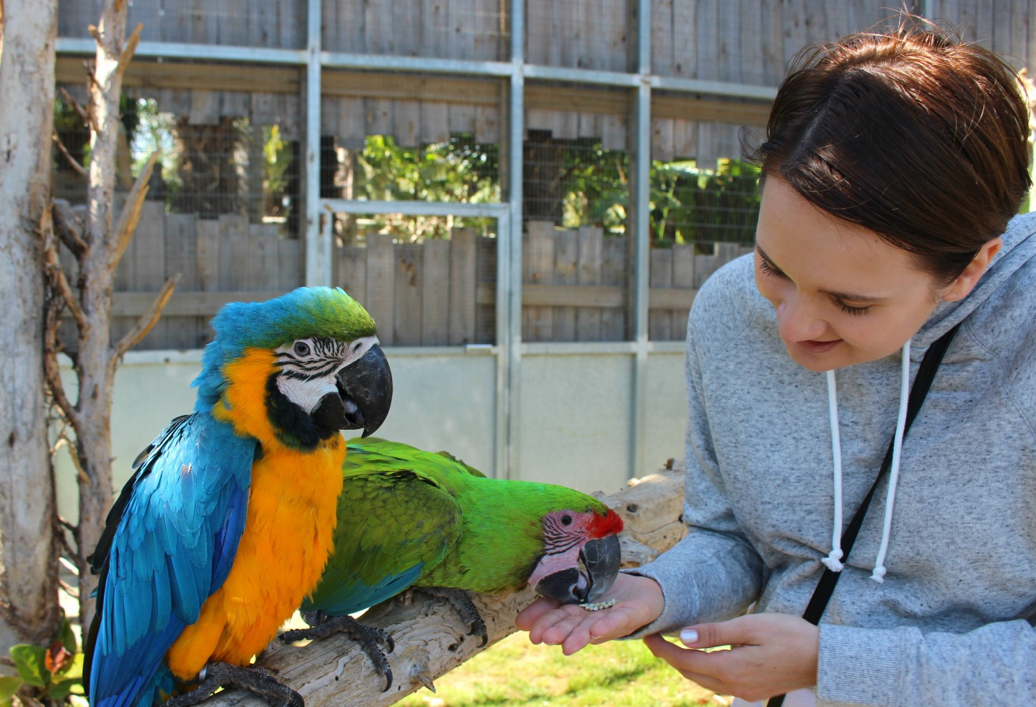 Feeding birds at Jardin del Papagayo in Benicarlo, Spain
