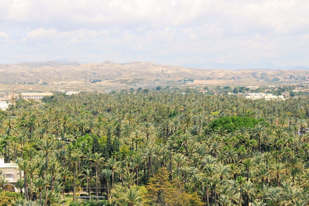 Palm Grove in Elche
