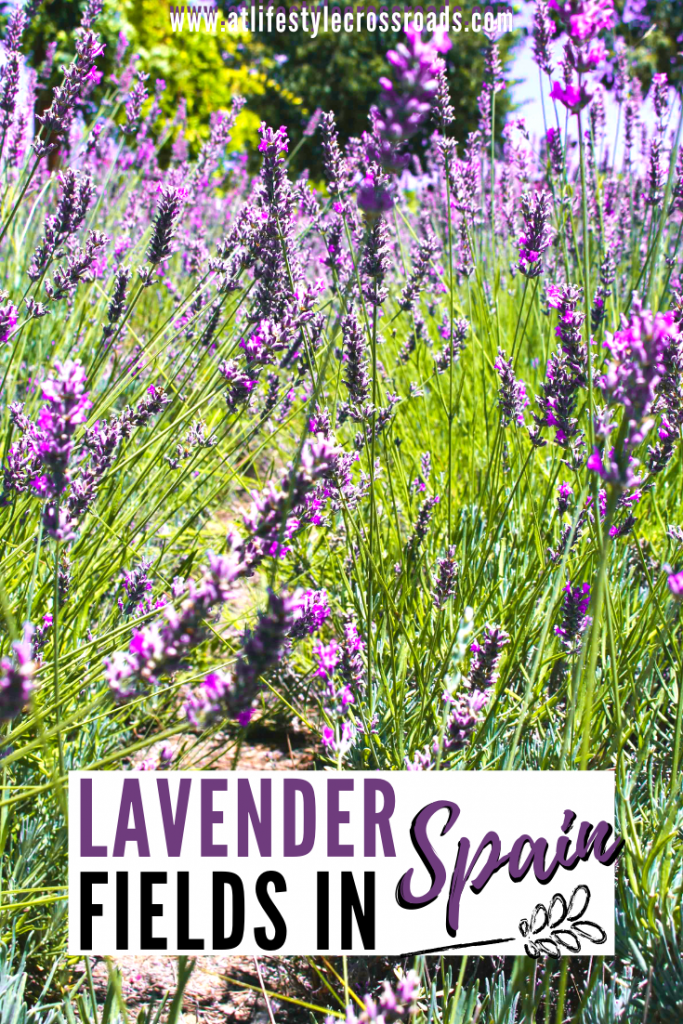 Pinterest image for Lavender Feels in Spain Blog Post