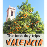 Oranges on the streets of Valencia, Spain
