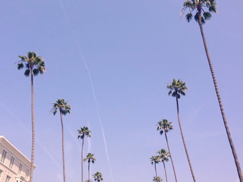 Palms in Los Angeles