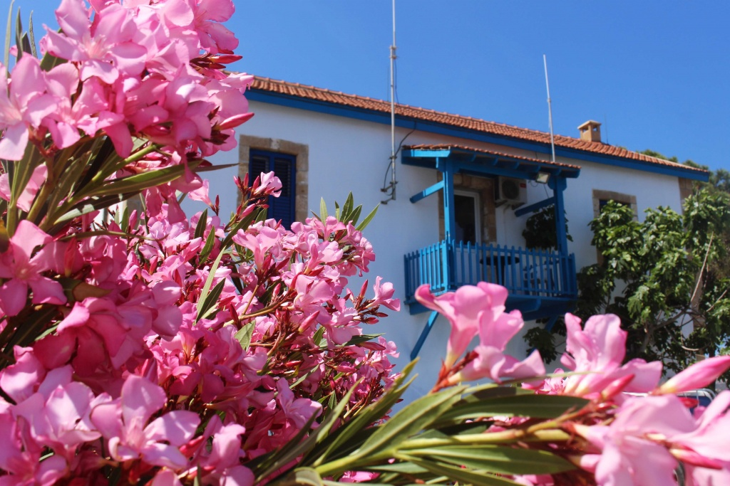 Pink flowers and white-blue houses in the small village of Latchi in Cyprus