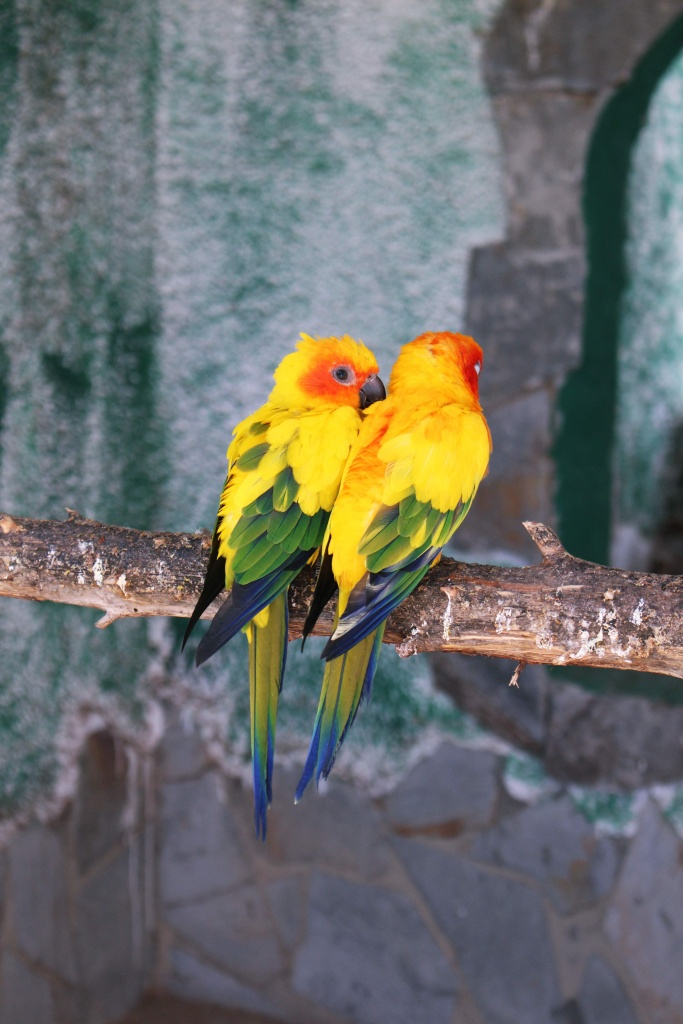 Sun Conures at Jardin del Papagayo in Benicarlo, Spain
