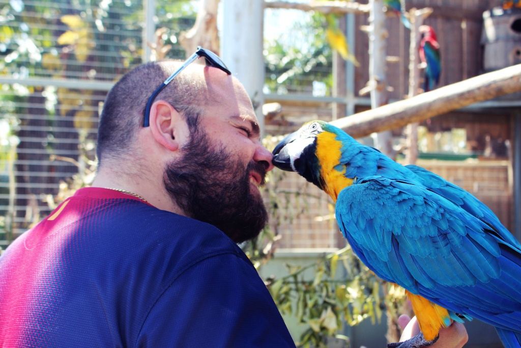 Playful and funny macaw at Jardin del Papagayo in Benicarlo, Spain
