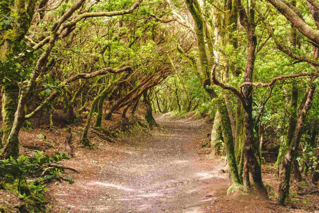 Anaga Forest Nature Reserve in Tenerife, Canary Islands