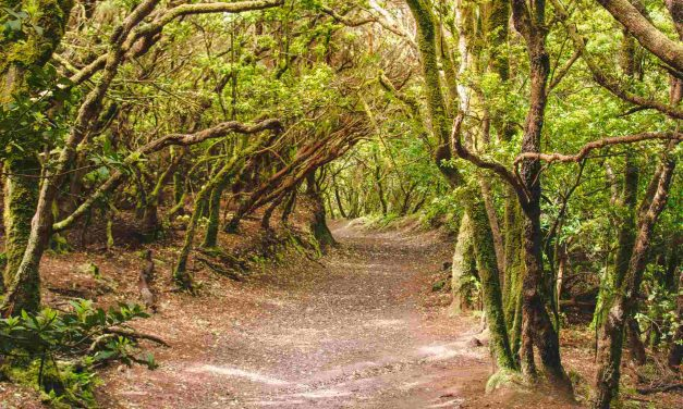 Must-See Magical Forests in Spain