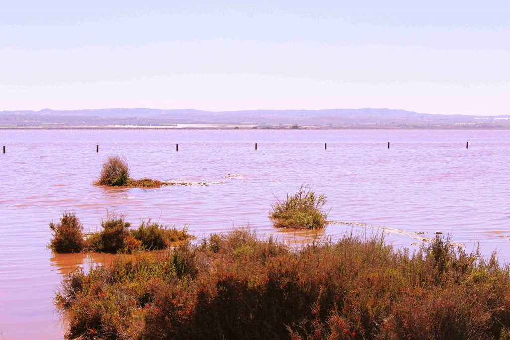Pink Lake in Alicante