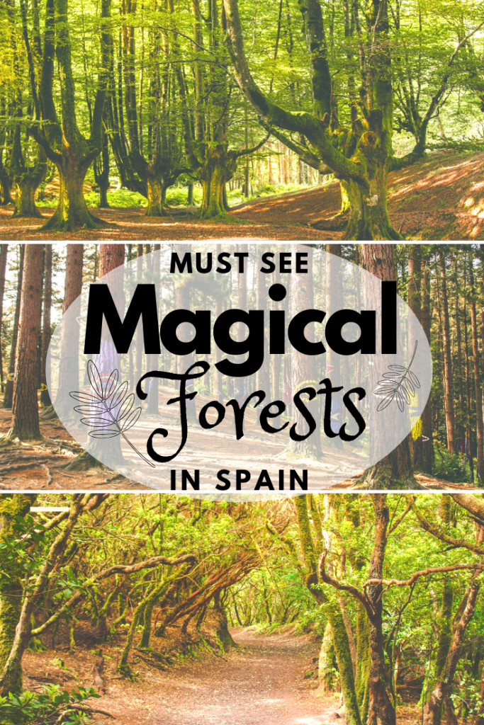 Magical forests in Spain for nature lovers