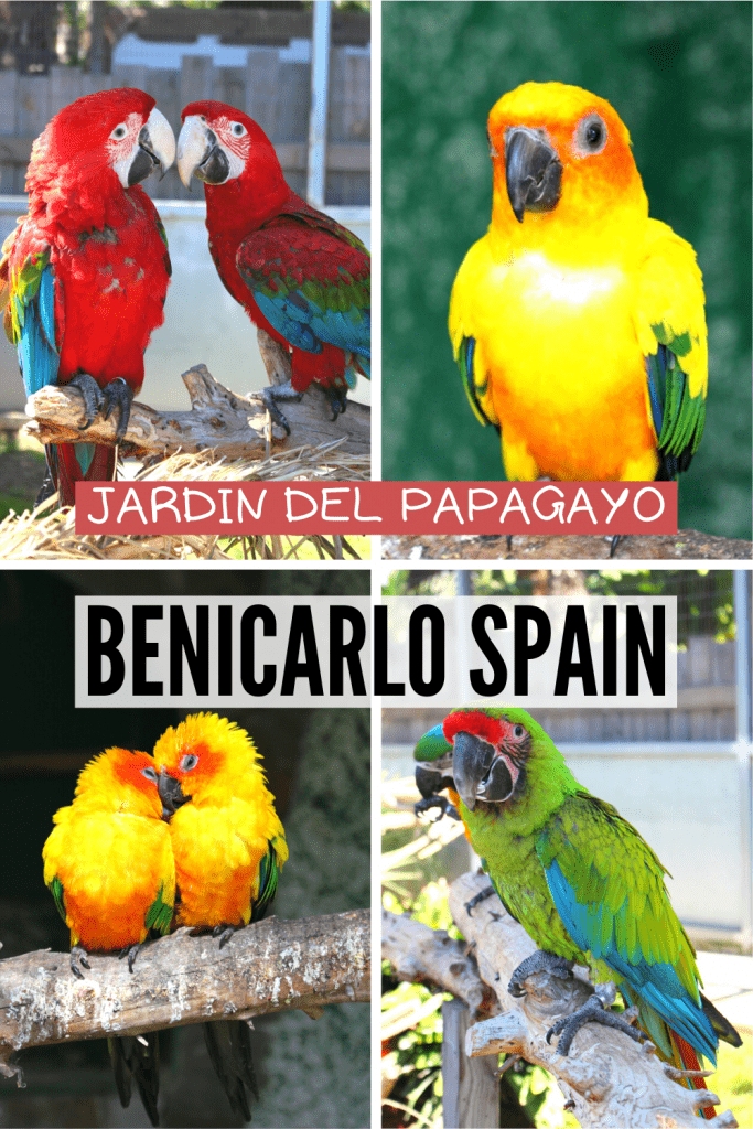 Pin with 4 birds about Jardin del Papagayo in Benicarlo, Spain