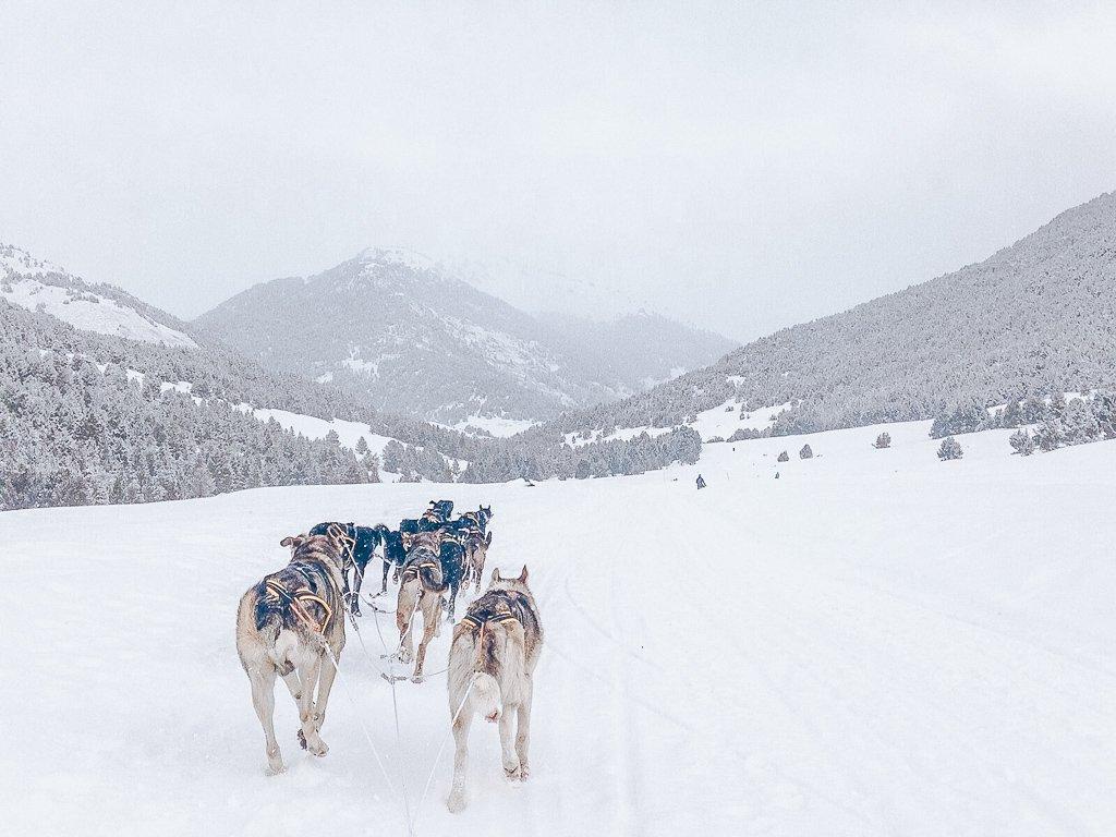 Dog sledding in Baqueira Beret Spain