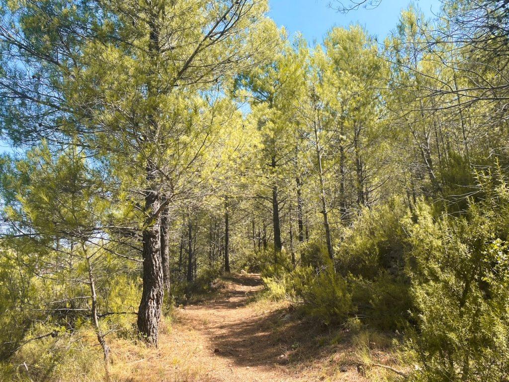 Teresa - Hiking in Castellon